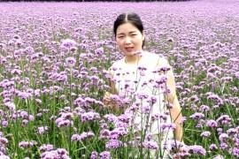 蝶恋花唯美篇—湖南溆浦思蒙薰衣草庄园