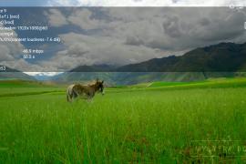 良心著作免费不限流量高速唯品恩 - 老王加速器安卓版最新版